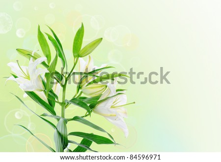 image of a beautiful white lily flowers. - Shutterstock ID 84596971