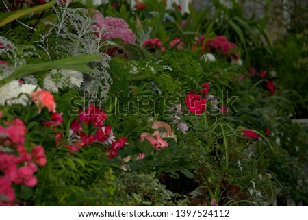 Image of a bed of various hothouse flowers