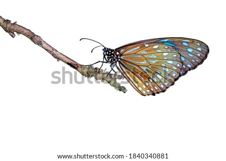 Image of a butterfly in isolated