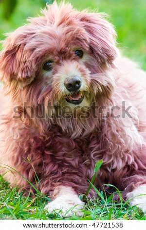 Image of a dog that is colored its hair