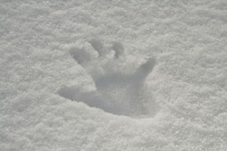 Image of a hand-print in snow.