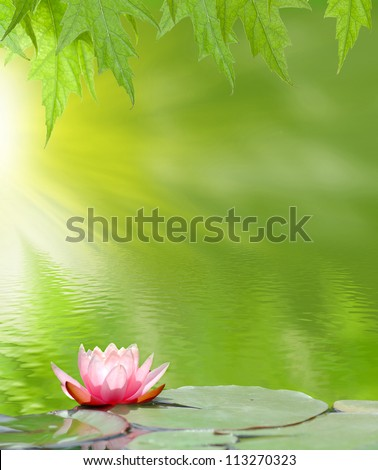 image of a lotus on the water...