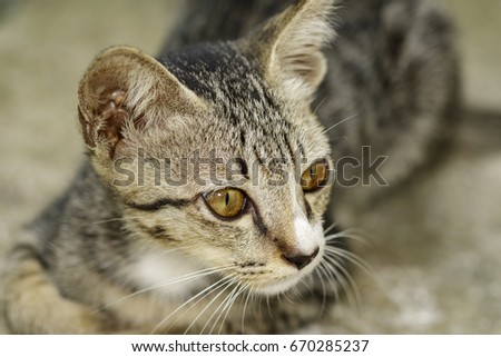 Image of a lovely cat. Pet Animal. #670285237