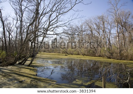 Image of a New Orleans area swamp with prominent reflections