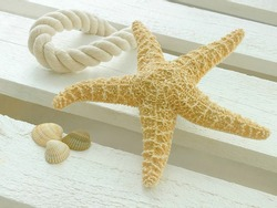Image of a sea star