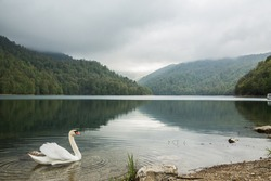 Image of a swan on a lake in the mountains of Azerbaijan