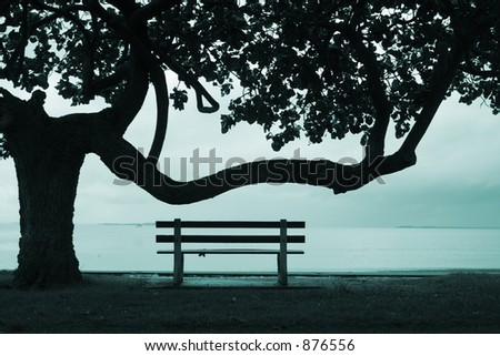 Image of a tree & park bench