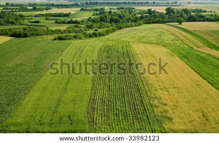 Image of a wheat and corn field