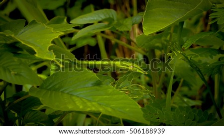 Image of Abstract Asian tropical snake and green leaf in the forest with metallic dark style,Green vine snake,Long-nosed whip snake  #506188939