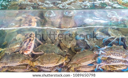 Image of alive blue swimming crabs in glass tank from seafood market. #1089650798