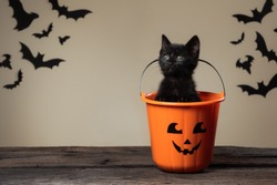 Image of an adorable black kitten sitting in halloween trick or treat bucket on palomino background with black bats with copy paste.