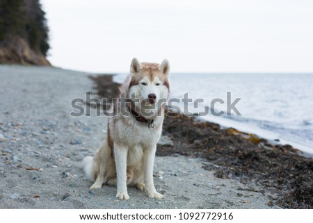image of attentive beige and...