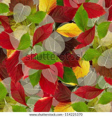 image of autumn leaves as a background