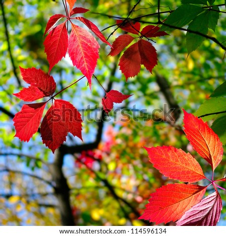 image of autumn leaves in  park