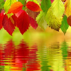 Image of autumn leaves over the water close up