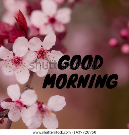 image of beautiful flowers with text: GOOD MORNING.