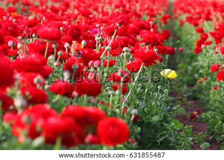 Image of beautiful red spring flowers
