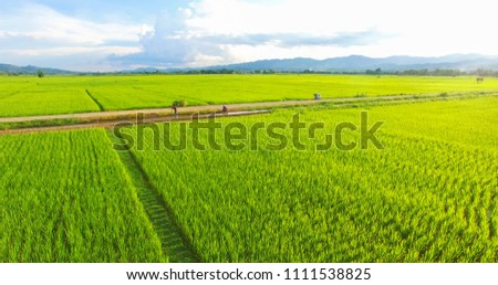 Image of beautiful Terraced rice field in water season and Irrigation from drone,Top view of rices paddy field,nan,thailand ストックフォト ©