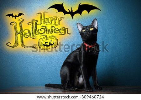 Image of black cat on dark blue background with graphic wording \