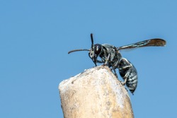 Image of black wasp on the stump on nature background. Insect. Animal.