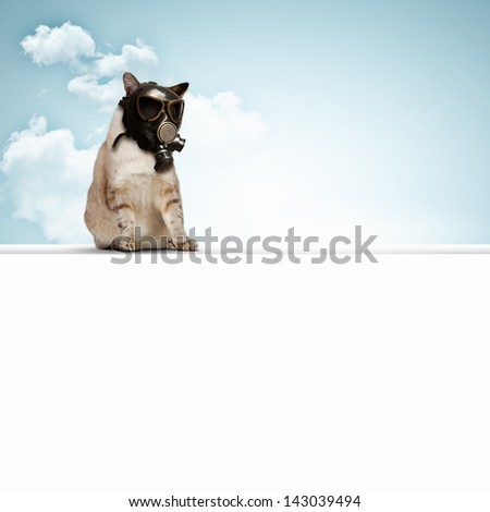 Stock Photo Image of cat in gas mask. Ecology concept