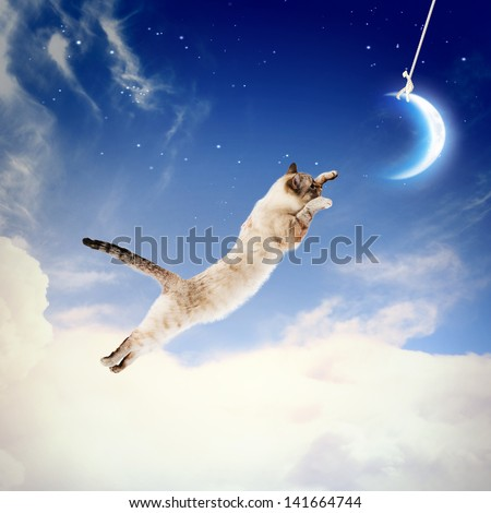 Image of cat in jump catching moon