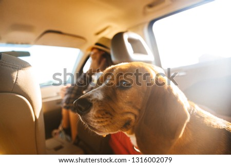 Image of caucasian woman 20s in straw hat riding in car with her brown pedigree dog #1316002079