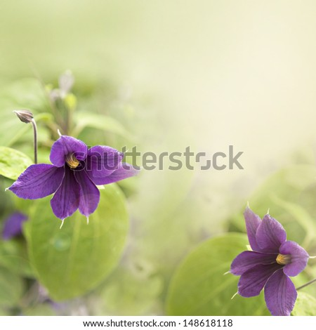 Image of climbing clematis plant with room for text.