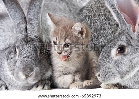 Image of cute kitten between two grey rabbits - stock photo