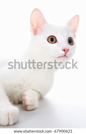 Image of cute white cat lying in studio over white background