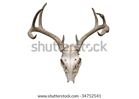 Image of deer skull on white background