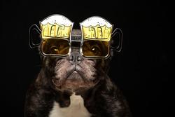 image of dog glasses dark background