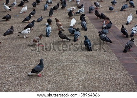 Image of Doves