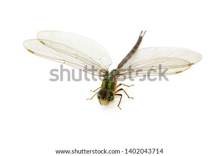 Image of dragonfly on a white background. Transparent wings insect. Insect. Animal. #1402043714
