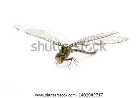 Image of dragonfly on a white background. Transparent wings insect. Insect. Animal. #1402043717