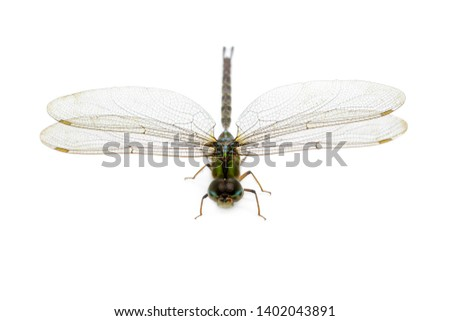 Image of dragonfly on a white background. Transparent wings insect. Insect. Animal. #1402043891