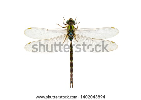 Image of dragonfly on a white background. Transparent wings insect. Insect. Animal. #1402043894