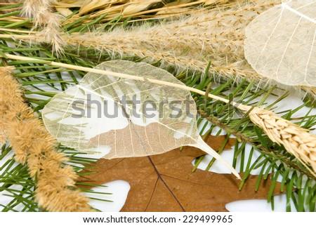 image of dried plants closeup