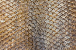 image of dry arapaima fish skin for background texture.