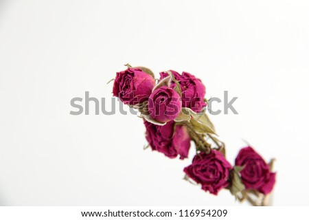 image of dry roses