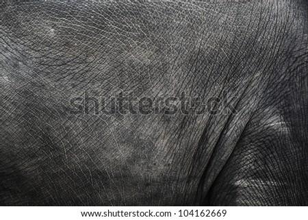 Image of elephant skin
