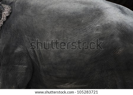 Image of elephant skin
