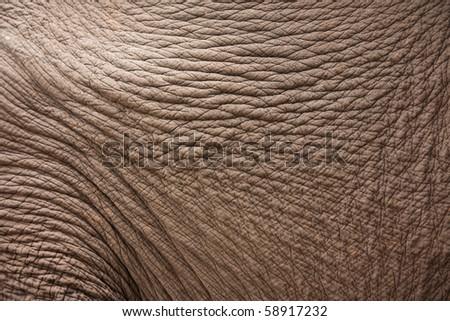 Wood skin texture