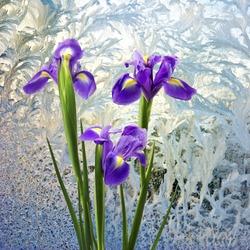 Image of flowers on window frosty pattern background