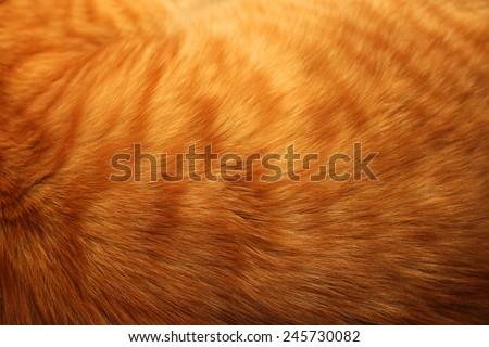 Image of ginger cat's fur background
