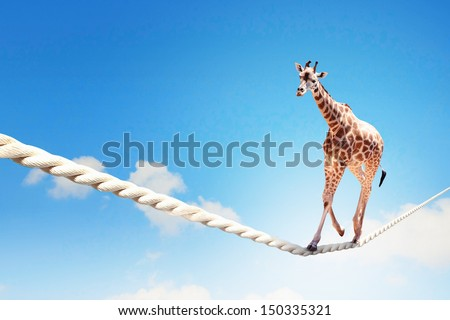stock photo image of giraffe walking on rope high in sky 150335321 - Каталог — Фотообои «Животные»