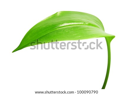 Image of green leaf isolated on white background