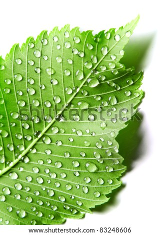 Image of green leaf with drops of water over white closeup