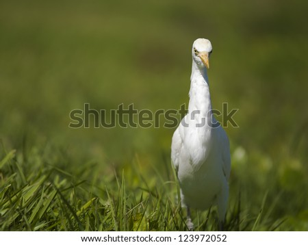 Image of heron bird on the grass