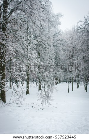 Image of Iced rain in Moscow parks, natural disaster #557523445